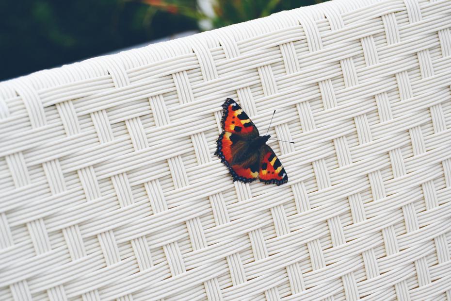 Sommerhus-sommerfugl