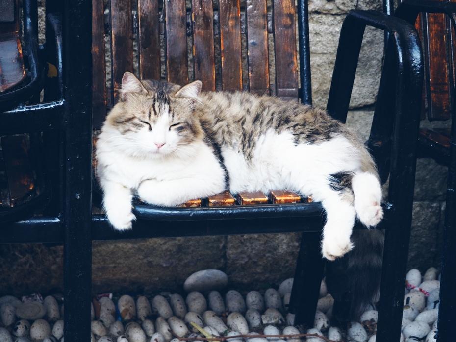 Kat i stol