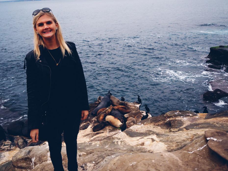 La-jolla-beach-søløver-san-diego