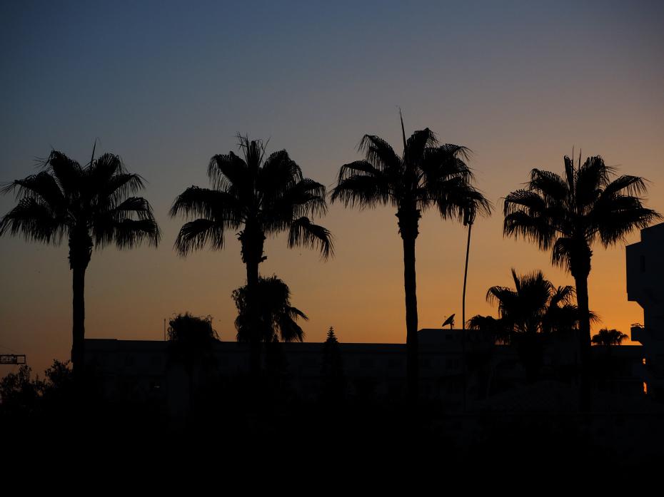 Solnedgang-palmer
